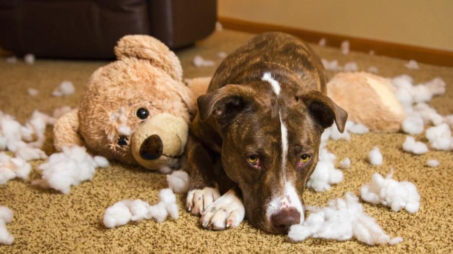 Cincinnati Dog Obedience Training - Puppy Prep School